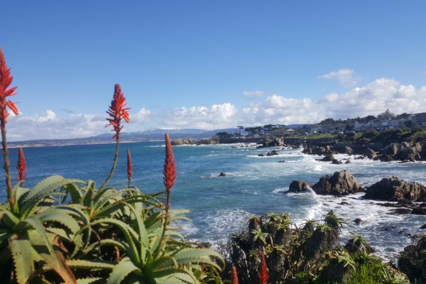 Scenic Tour Monterey 17 Mile Drive